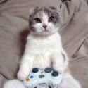 cat-video-games-300x223.jpg