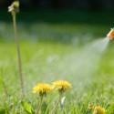 sprayweeds-roundup.jpg