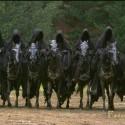 black-riders.jpg